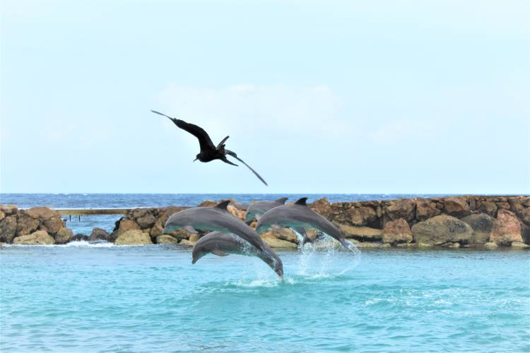 Four dolphins giving a show