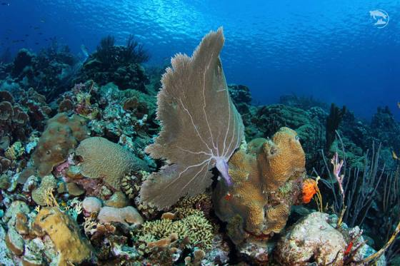 The underwater life of Curacao